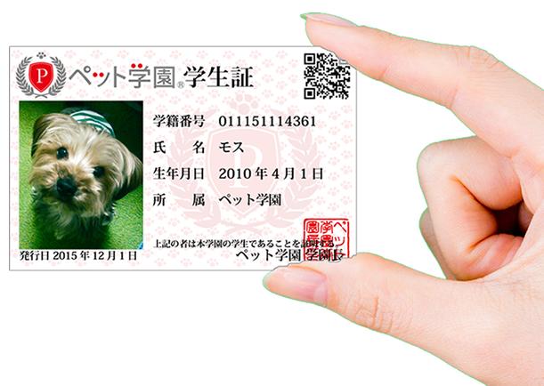 card_m